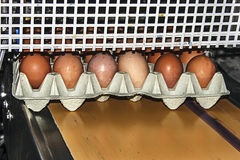 Egg packaging line 2 Royalty Free Stock Photos