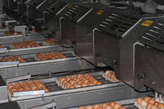Egg packaging line Stock Photos