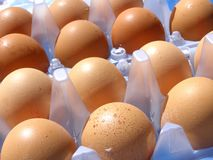Egg packs Stock Images