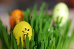 The egg painted in yellow color, Royalty Free Stock Photos