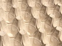 Egg paper carton background Royalty Free Stock Photography