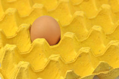 Egg in paper tray stock images