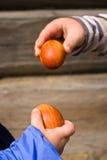 Egg Pecking. Children in the hands hold Easter eggs stock photo