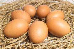 Egg is on the pile Royalty Free Stock Images