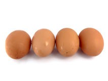 Egg. Place chicken on a white background Stock Images