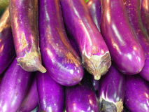 Egg plant Royalty Free Stock Images