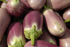 Egg plant selling Stock Photos