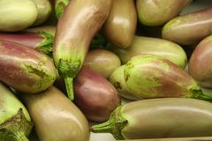 Egg Plant Vegetable Background stock image