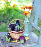 Egg-plants and flowers Stock Image