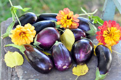 Egg-plants and flowers Stock Images
