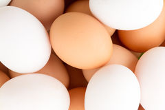 egg in plastic basket Royalty Free Stock Photography