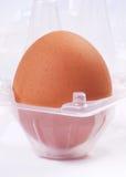 Egg in plastic box. Single egg in plastic box Royalty Free Stock Photos