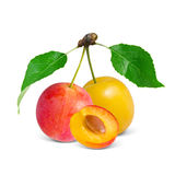 Egg-plum Stock Photos