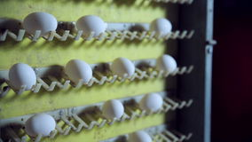 Egg production line in action on the poultry farm. stock footage