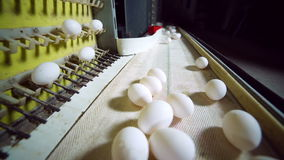 Egg production line in action on the poultry farm. stock video footage