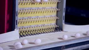 Egg production line in action on the poultry farm. stock video
