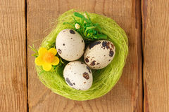 Egg quail the green nest Stock Photo