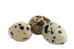 egg quail three royaltyfri foto