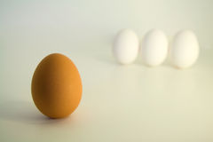 Egg Racism. A single brown egg with three white eggs in the background royalty free stock photos
