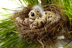 Egg in real nest Royalty Free Stock Images