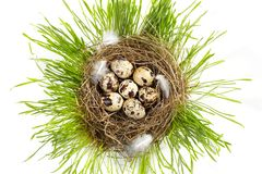 Egg in  real nest Stock Photography