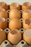 Egg row Royalty Free Stock Photos