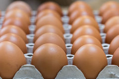 Egg is row Stock Photos