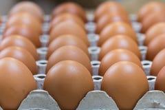 Egg is row Stock Photos