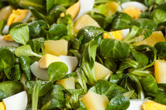 Egg salad. Egg salat with a green vegetables and potatos covered with olive oil Stock Images