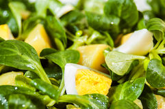 Egg salad. Egg salat with a green vegetables and potatos covered with olive oil Stock Photos