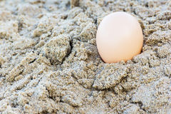 Egg at sand beach Stock Photos