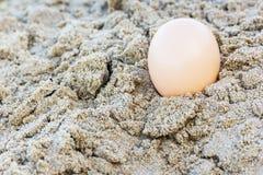 Egg at sand beach Stock Photos