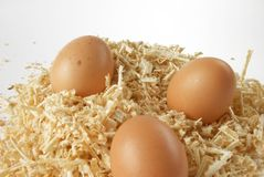 Egg in sawdust over white Royalty Free Stock Photo