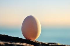 Egg at the seashore Royalty Free Stock Image