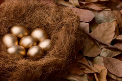 Egg series : Seven golden eggs (with background). Seven golden eggs in nest surrounded by dead leafs. Shot a bit underexposed around the golden eggs to enhance stock photography