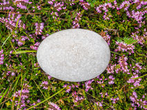 Egg shaped rock. A perfectly egg shaped rock lying on a bed of pink flowering heather Royalty Free Stock Photo