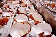Egg-shell. Stock Photography