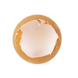Egg shell Royalty Free Stock Images