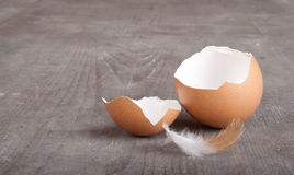 Egg shell Royalty Free Stock Photography