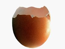 Egg Shell Stock Photography