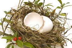 Egg Shell in a Bird Nest Royalty Free Stock Image
