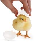 Egg shell hat Stock Photo