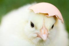 Egg shell hat Stock Photos
