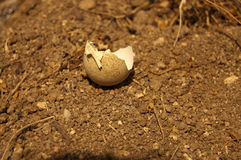 Egg shell. Photograph of a broken eggshell on Earth Royalty Free Stock Photography