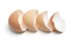 Free Egg Shells Royalty Free Stock Photo - 14069165