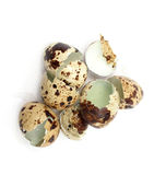 Egg shells Royalty Free Stock Photos