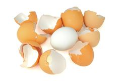 Egg shells with one good egg Stock Photography