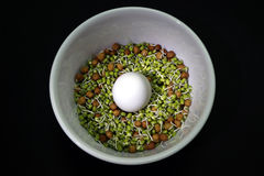 Egg, Sprout, Chana sprout. A protein rich breakfast diet consists of egg, sprout green gram Stock Images
