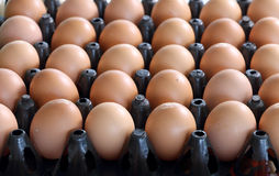 Egg in stack of eggs. Carton of fresh brown hen eggs Royalty Free Stock Photography