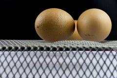Egg on steel basket Stock Image